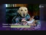 «Горячая линия» для животных