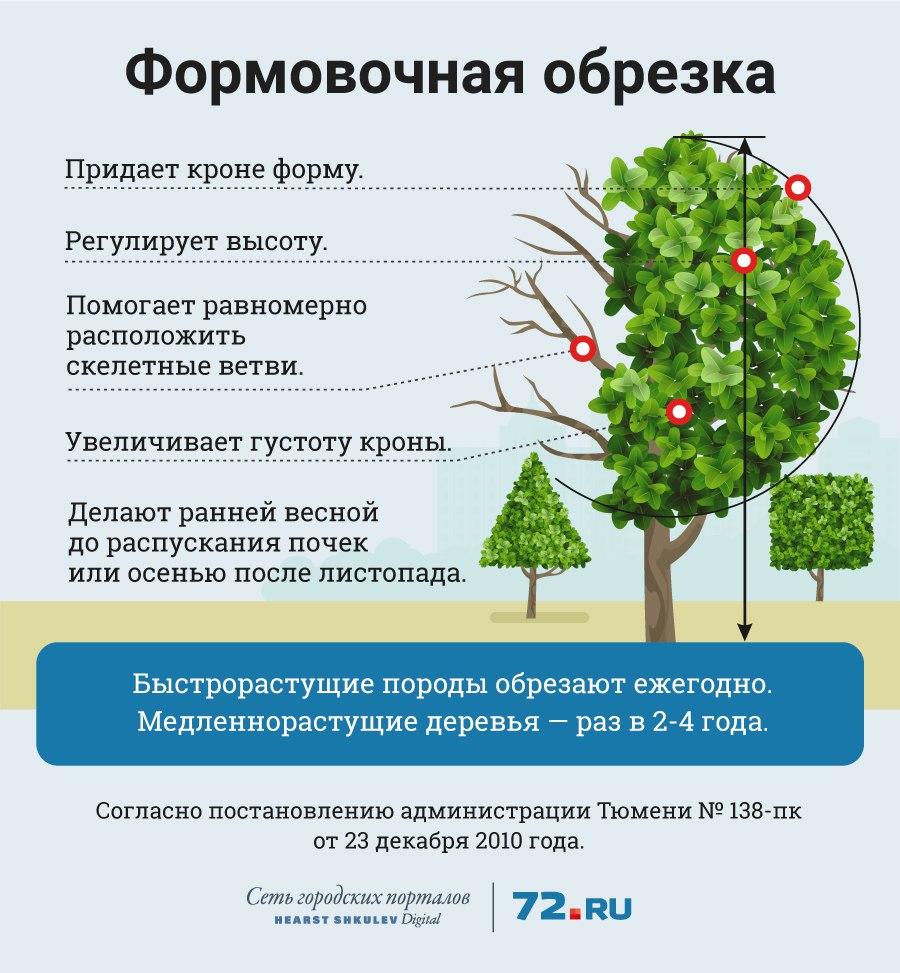 омолаживающая обрезка деревьев нормы и правила