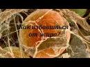 Как избавиться от жира. Жировая клетка -документальный фильм исследование.