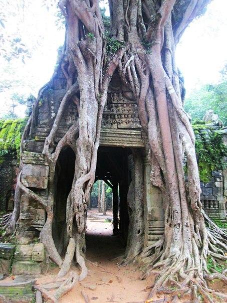 Наш загадочный Ангкор RP-kwxzvMGM