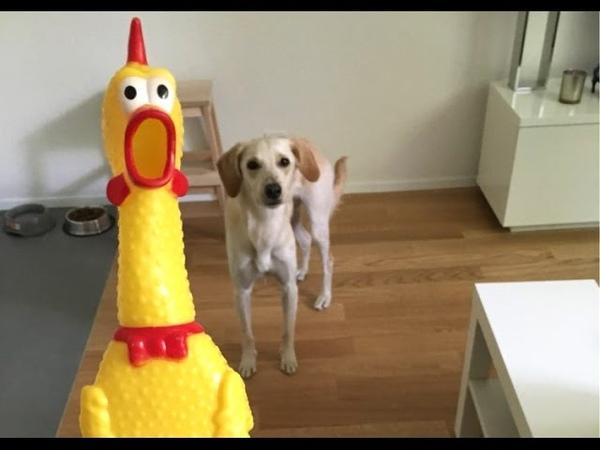 Игрушка Кричащая курица screaming chicken с AliExpress