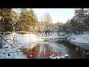 Vivaldi - 4 seasons - Вивальди 4 сезона - Времена года - полностью.