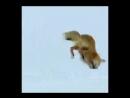 охота на мышей