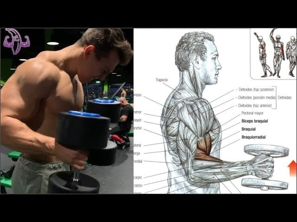 10 Ejercicios para Pecho y Biceps, 10 Exercises for Chest and Biceps