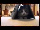 Прикол кошка в домике