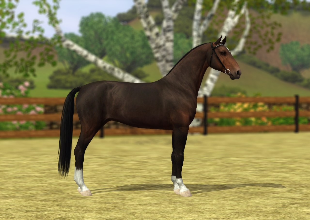 Регистрация лошадей в RHF 1.1 - Страница 39 A4Ra4tzBmL0