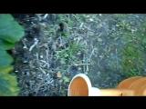 Корневая подкормка кабачков на компостных кучах