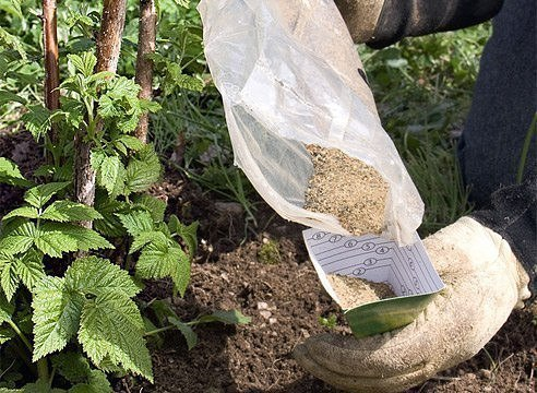 подкормка малины как и чем лучше как и чем удобрить малинукак правило, подкармливать малину необходимо трижды за весь период вегетации.время первой подкормки приходится на май.для этого многие