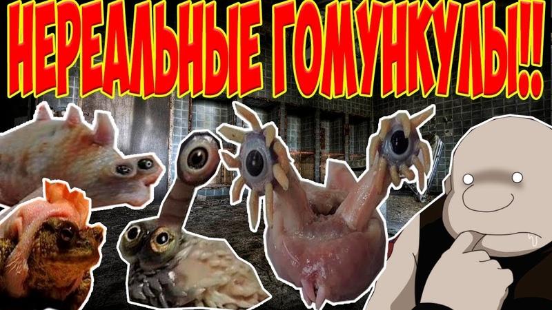 10 гомункулов,но больше трешака.[Ignatyuk](18)