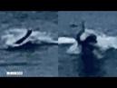 Man spots 'strange sea creature' near Huntington Beach - Unrecognizable