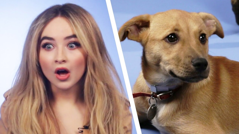 Sabrina Carpenter Plays With Puppies While Answering Fan Questions