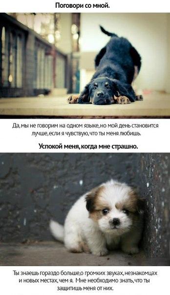 http://cs14109.vk.me/c7006/v7006808/3a5f0/K2RgCUpMtBQ.jpg