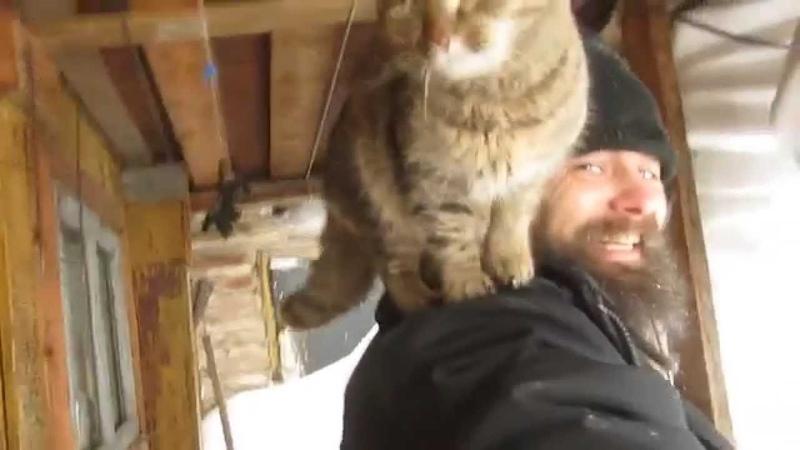 Мякиш мой любимый котейка встречает меня с похода по заявкам Кот Животный МойКот Тигр Узнавайка