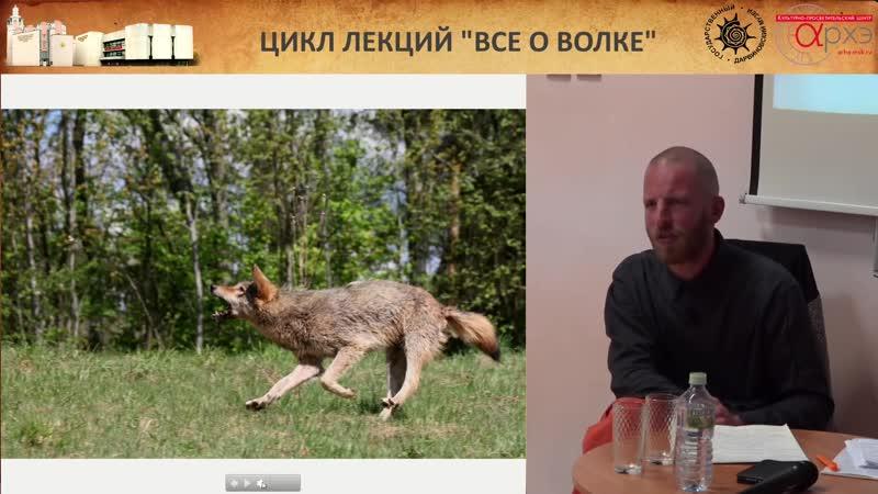 Алексей Верещагин Социальная жизнь псовых