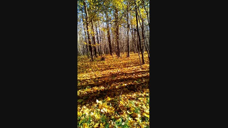 осень мордовская кармалка