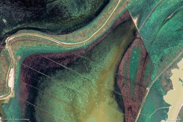 Все краски планеты: Google Earth показал новые удивительные снимки Земли