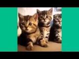 Дуже смішні котики від ютуба!