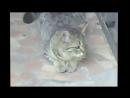 Привет, кошки самые милые создания на планете