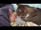 Коты любят малышей