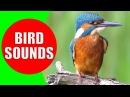 Bird sounds for kids - PART 1 - Bird Identification: Children Learn Common City Birds and Fowls