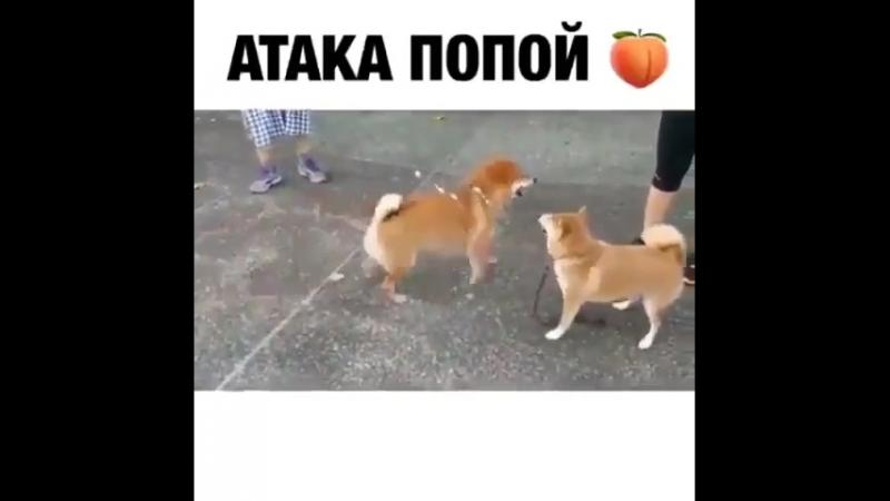 Что то новенькое)