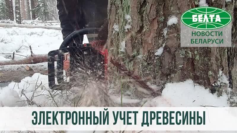 Электронная система учета древесины проходит тестирование в лесхозах Беларуси