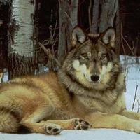 Волк Серый, 18 июня , Санкт-Петербург, id227184638