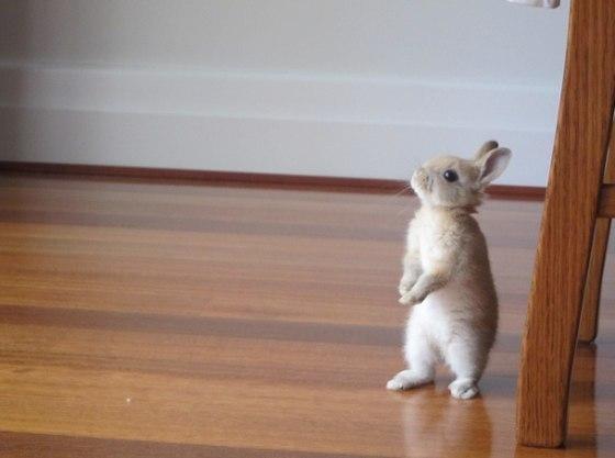 Пусть этот зайчик принесёт вам удачу :)