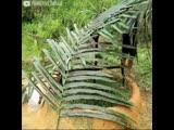Паренёк построил пруд для разведения рыбы