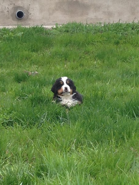 Купить собак и щенков из питомника и частные - Avito ru