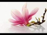 Deva Premal ~ Gayatri Mantra