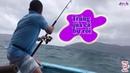 Trải ngiệm câu cá thu của cần thủ thứ thiệt và cần thủ chuyên nghiệp- nhật ký đi biển 17