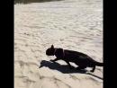 Черный котейка плавает