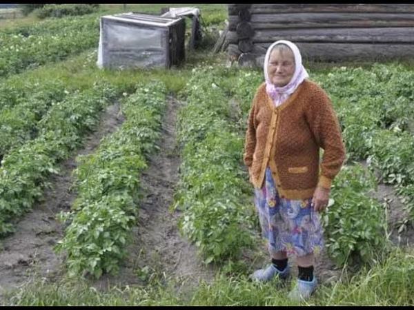 Людей обрекают на голод Запрет картошки