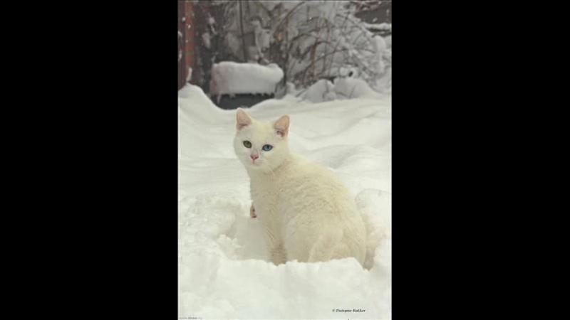 Зима пушистой белой кошкой...