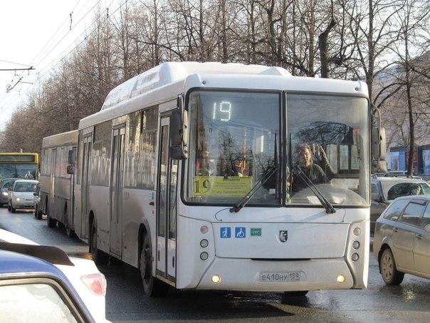автобусов Пермского края