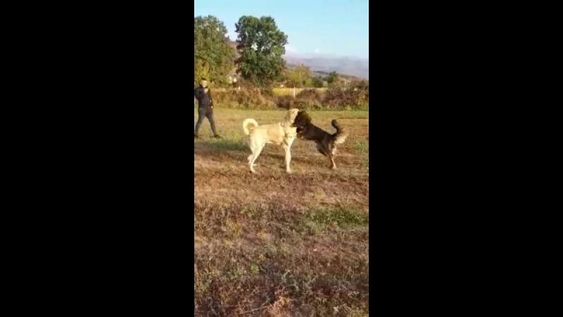Makedonyadan Quink oglu joshua 14 aylik deneme maci