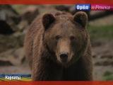 Орел и решка. Неизведанная Европа  Видео  Карпаты. Рахов. Украина