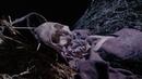 Черная суббота, или Три лица страха 1963 ужасы BDRip P2 Мишель Мерсье, Лидия Альфонси, Борис Карлофф, М.Дэймон, С.Андерсен