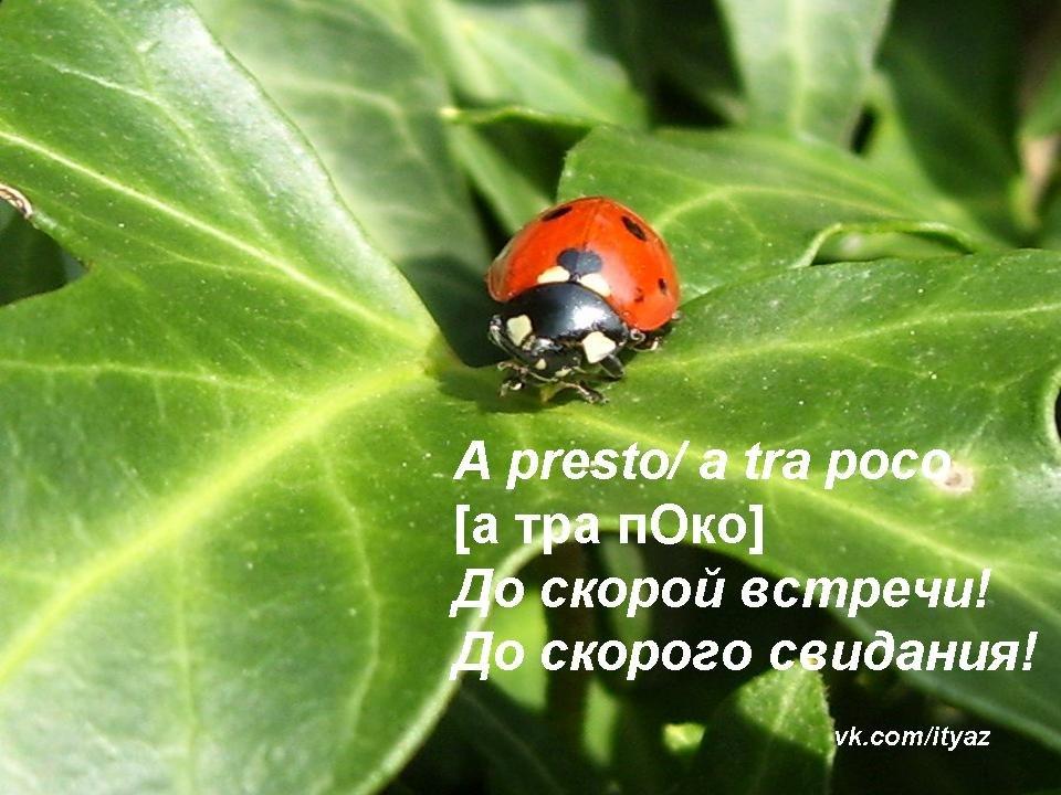 Изучаем языки - Страница 2 MLja3CqEdwE