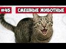 Смешные животные - болтливый котэ | Bazuzu Video ТОП подборка сентябрь 2017