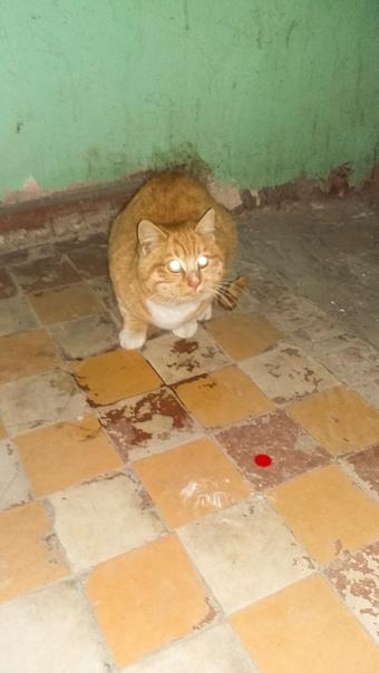 В пургу нашла котика