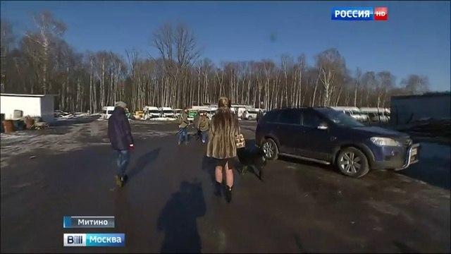 Вести-Москва • Коммерсанты уничтожают зеленый пояс Москвы