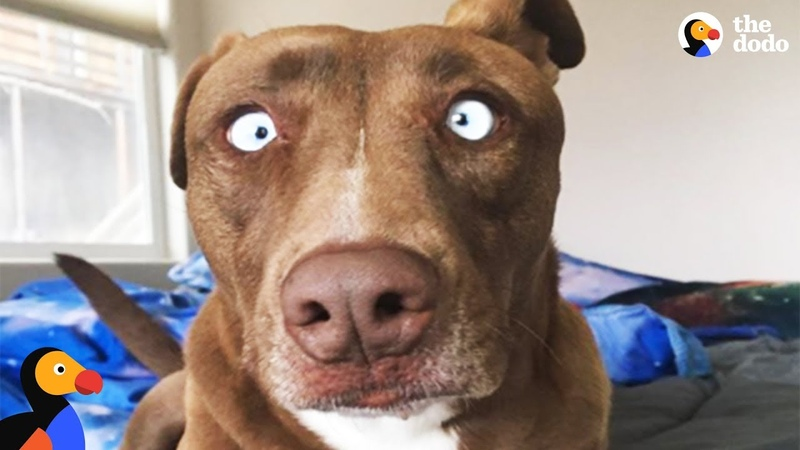 Dog with Unique Look Finds Woman Who Thinks She's Perfect | The Dodo