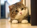 МАРУ - Самый лучший кот в мире!!!!!!........приколы 2013,2012,квн,лунтик,обзор,маша и медведь,игры