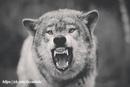 Не бойтесь когда я ругаюсь, кричу и выражаю свои эмоции. Бойтесь - когда я молчу.