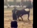 Лошадь танцует вместе с хозяином