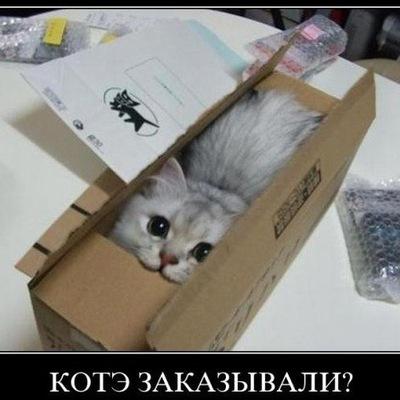 Никита Курчатов, 22 января 1984, Коломна, id71286601