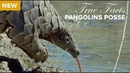 True Facts Pangolins Posse