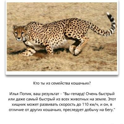 Илья Попик, Москва, id163886854